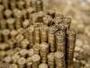 Больше 11 тысяч монет сдал в Нацбанк житель ВКО