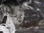 В ВКО в подвале многоэтажки жила рысь