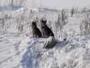 В Усть-Каменогорске обсуждают появление «стаи волков» в жилом районе