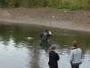 В ВКО устанавливают личность утонувшего человека